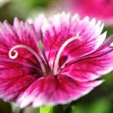 flowerofthedesert ..